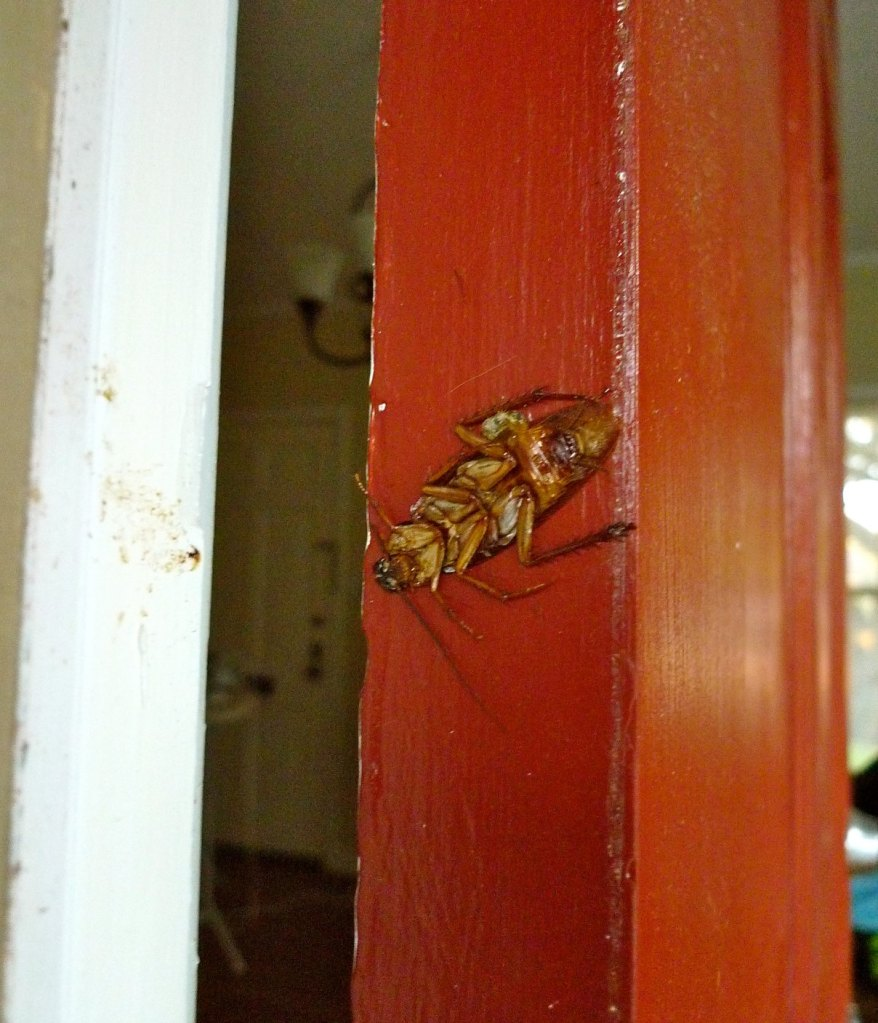 I found this squashed roach on the door one morning. Finally one I didn't have to squash myself!